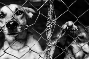 Lo que está en juego en el maltrato animal