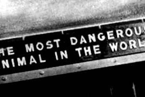 El Animal más peligroso del mundo